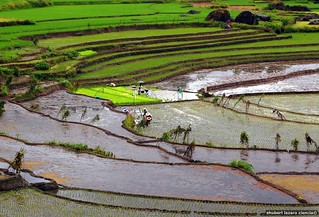 Nagacadan Rice Terraces (Kiangan, Ifugao) | by ~MVI~ (warped)