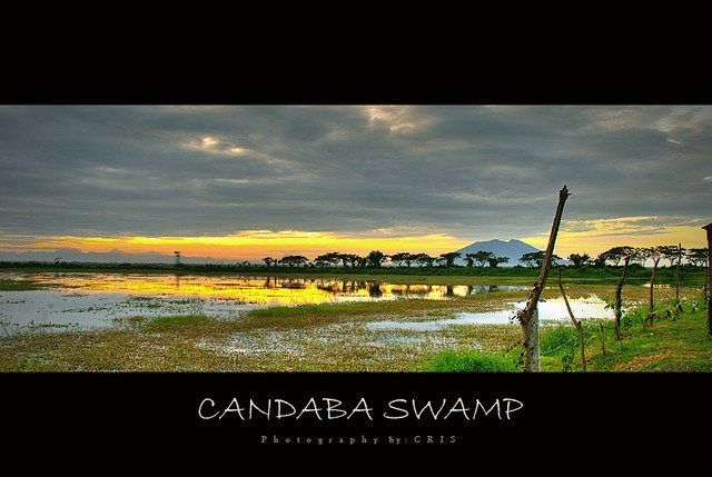 candaba swamp the beautiful scenery of candaba swamp