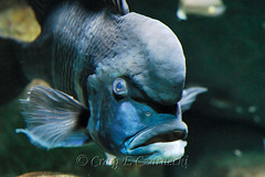 Ugliest fish I've seen | by craigczar