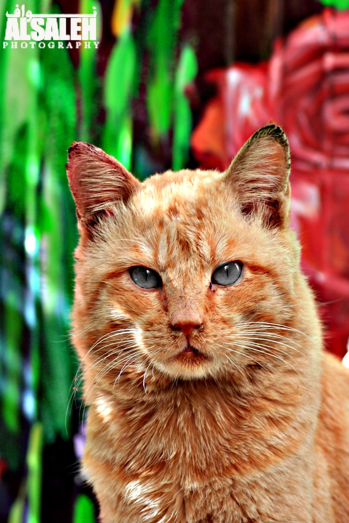 eliminating cat urine odor from upholstery