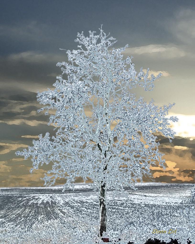 ice tree on bright sunset