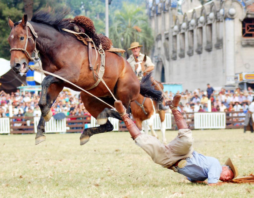 funny horse fails - 796×619