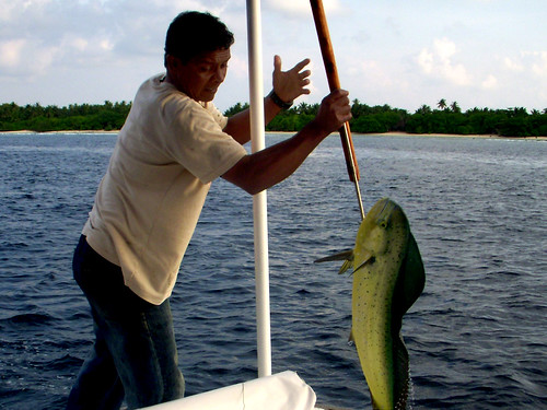 Today Catch Today's Catch Dolphin