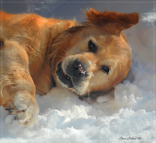 Thera playing in the snow | by steinliland