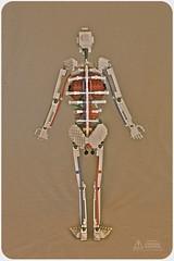 Lego Anatomy Skeleton: Back