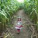 Corn Corridor