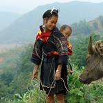 Black Hmong woman and buffalo, Sapa Vietnam