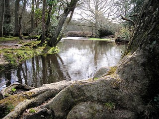 New Forest - River At Mill lane Brockenhurst 2 | by Chalkie_CC