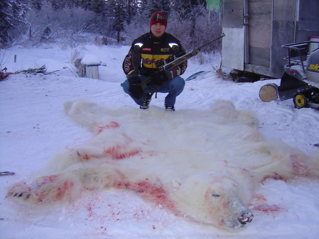 Polar Bear Shot In Noorvik Noorvik Subsistence Hunter
