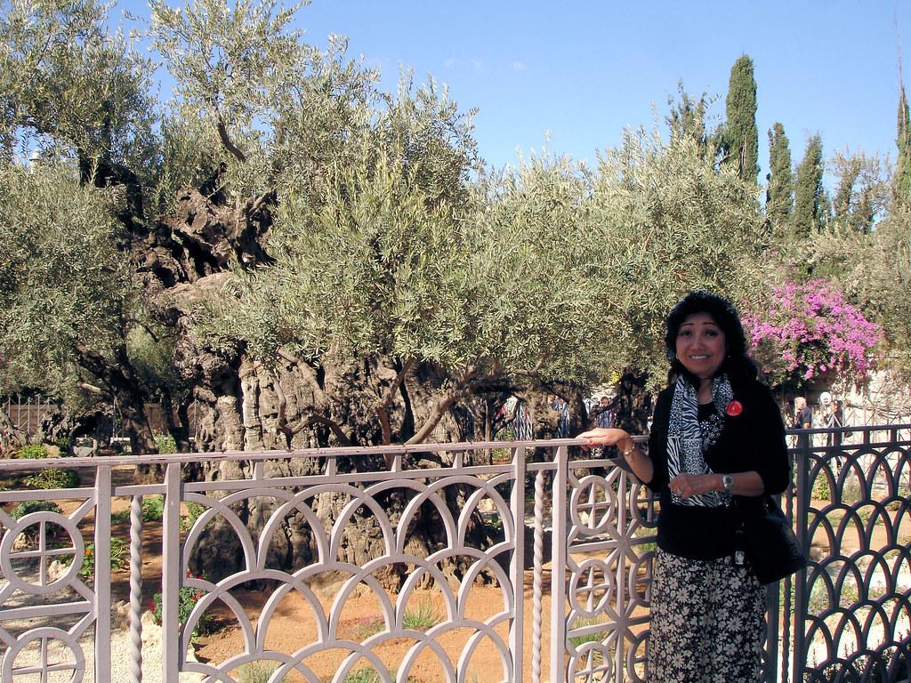 Dsc04568 Garden Of Gethsemane The Garden Of Gethsemane Is Flickr