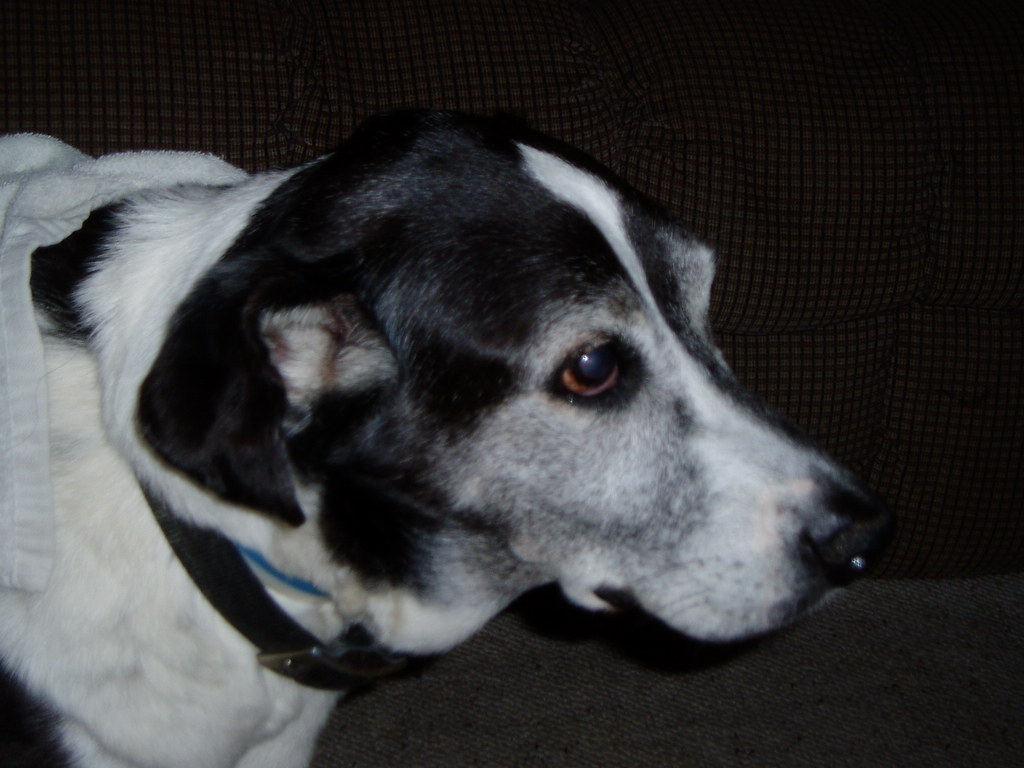 Dog Passed Away  Days After Bladder Stone Surgery
