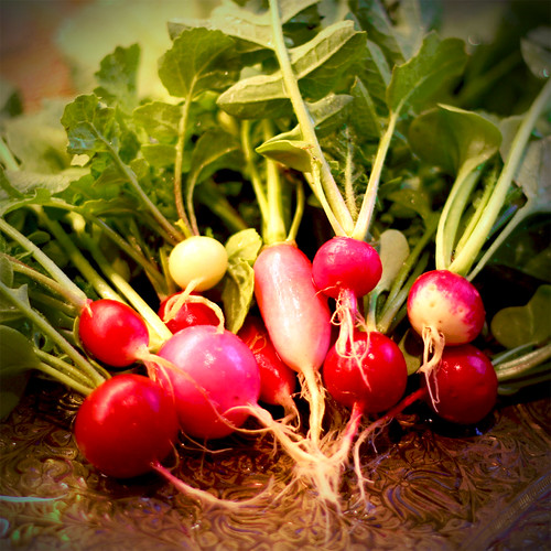 Radishes | by The Creaking Door