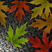 Leaves Composite