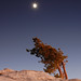 Rising Moon and Rising Pine