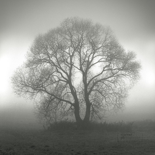 A Tree at The Fog | by Vincént