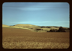 Wheat farm, Walla Walla, Washington  (LOC) | by The Library of Congress