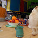 table cat