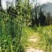 a path through fresh grass