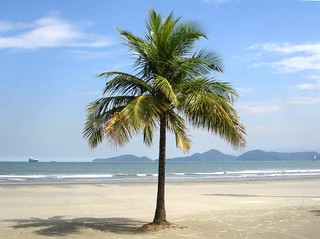 Lone coconut tree on a tropical beach. | by rps.net