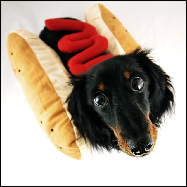 pwease don 39 t eat me freddy in his hot dog with ketchup c flickr. Black Bedroom Furniture Sets. Home Design Ideas