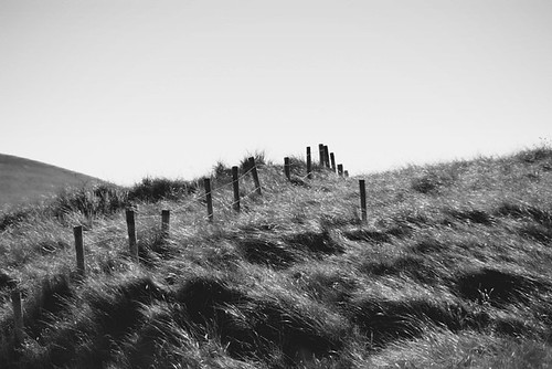 Windswept grass and fence | by Donncha Ó Caoimh