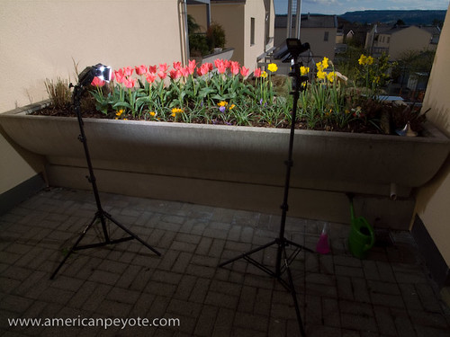 Lazy Sunday Flowers Lighting Setup | by American Peyote