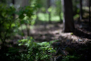 Freelensing forest | by Pierre Pocs