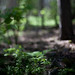 Freelensing forest