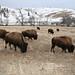 iowaIMG_0058 Custer National Park