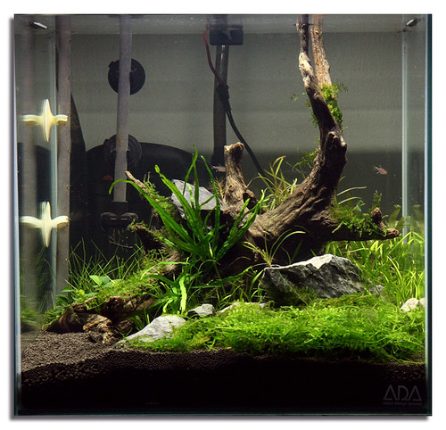 Image Result For Cube Aquarium Aquascape