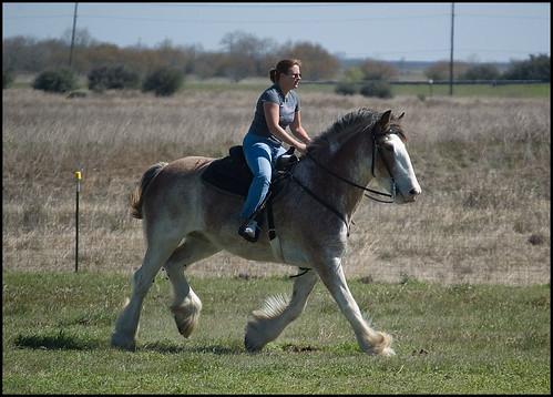 ... draft horses aren't good for riding? | Saveena (AKA LHDugger) | Flickr