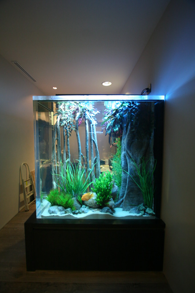500 gallon freshwater freshwater installation in mexico for 15 gallon fish tank