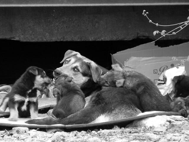 Bogdan S Dog Training Lethbridge