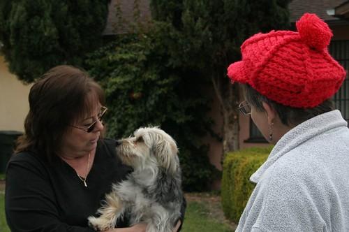 Cathy S Dog Grooming Swansea