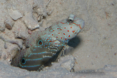 Goby | by Mr Yankee