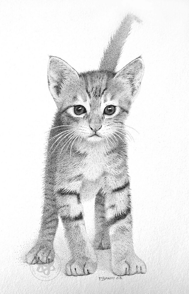 Kitten Pointillism Pen And Ink Many Thanks To Flickr