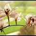 9521-2orchids