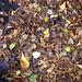 leaf bath