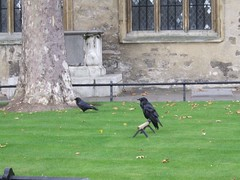 Tower of London ravens | by wjmarnoch