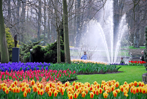 Book Amsterdam Tours