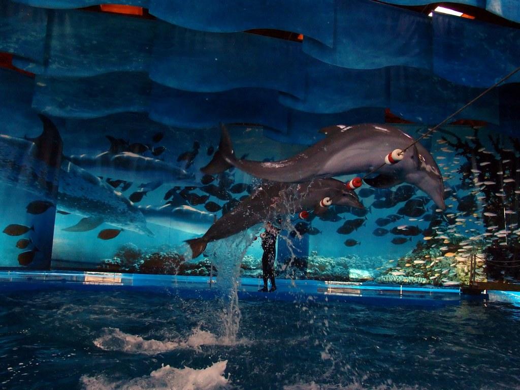 Barcelona Zoo Dolphins Grosser Tummler Im Zoo Barcelona Sp Flickr