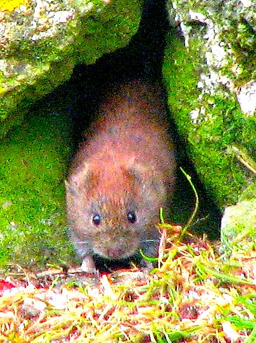 Vole through Hole | by bothy photo