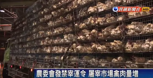 台湾で大規模な鳥インフルエンザ感染