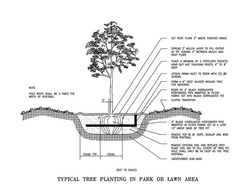 Autocad Typical Tree Planting Park Or Lawn Area