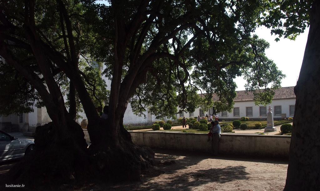 Les jardins de la Quinta da Vista Alegre sont superbes, avec cet arbre sans doute plusieurs fois centenaire