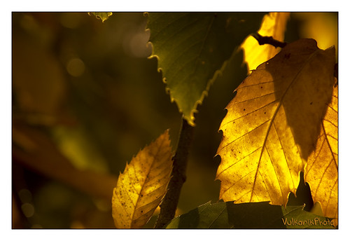 L'automne | by Quentin.HLB