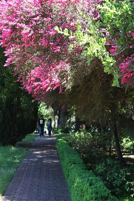Filoli Gardens Blogged Cindy Flickr