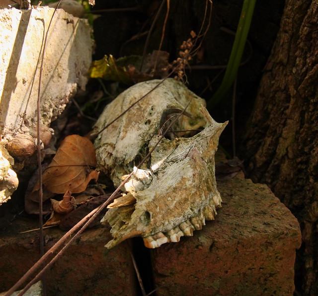 Crushed Skull on brick...