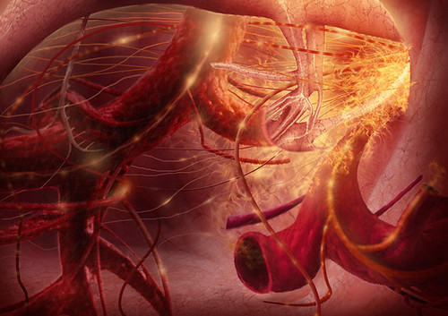 Inside Lungs