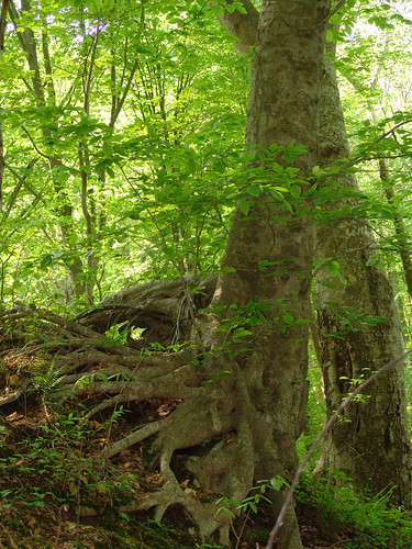 Crow S Nest Natural Area Preserve